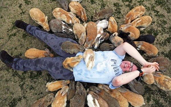 Du khách rất thích thú chơi đùa với những chú Thỏ