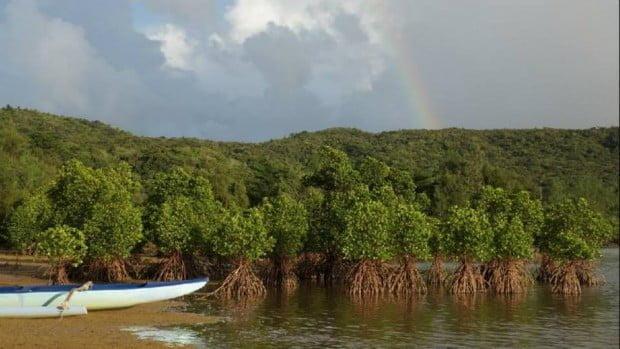 Iriomote-jima với rừng rậm, rừng ngập mặn, hòn đảo là một nơi tuyệt vời để khám phá trên sông bằng xuồng kayak. Nó cũng được bao quanh bởi các rạn san hô tuyệt đẹp và là một nơi tuyệt vời để khám phá bằng giàn khoan