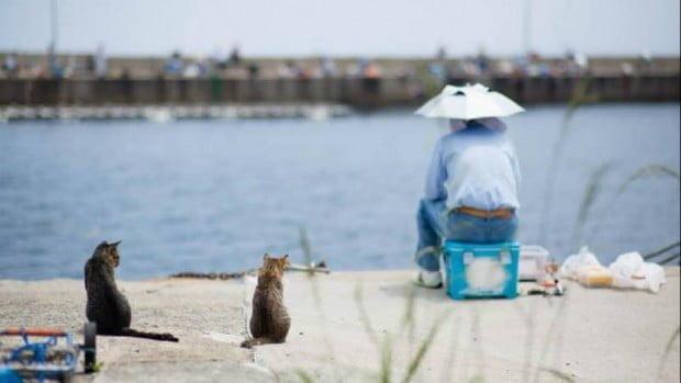Đảo Mèo