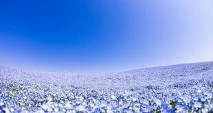 15 vườn hoa phải đến một lần ở Nhật Bản