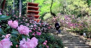 12 ngôi đền và miếu ở Nara với những bông hoa mùa xuân