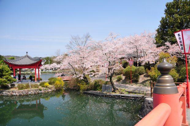 Công viên Ueon Onshi koen lãng mạn hơn vào mùa hoa Anh Đào