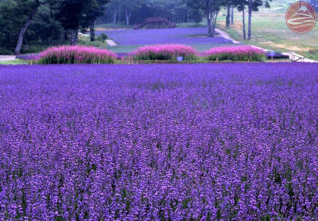Tambara Flower Park
