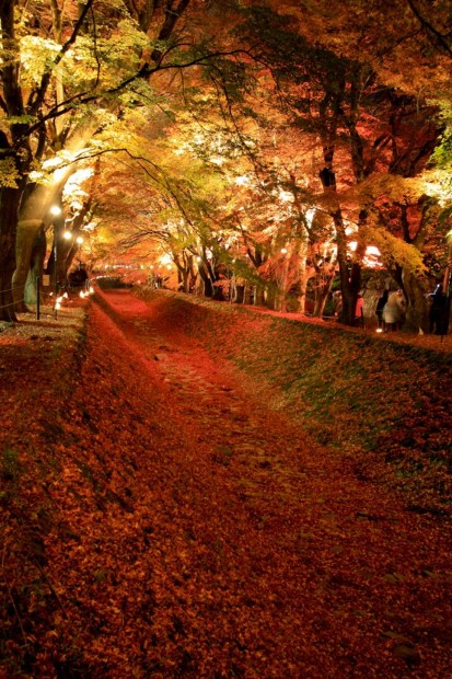 Tunnel of Maple Trees, Lake Kawaguchiko