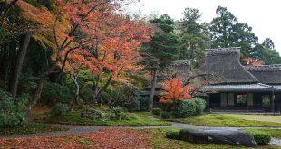 """Những Bức Ảnh Tuyệt Đẹp  Mùa Lá Đỏ 2016 """" Nara cuối thu """""""
