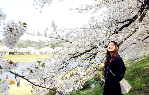 Nụ cười cô gái ngắm hoa anh đào