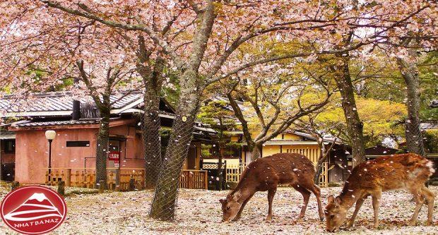 Những chú Nai ở công viên Nara