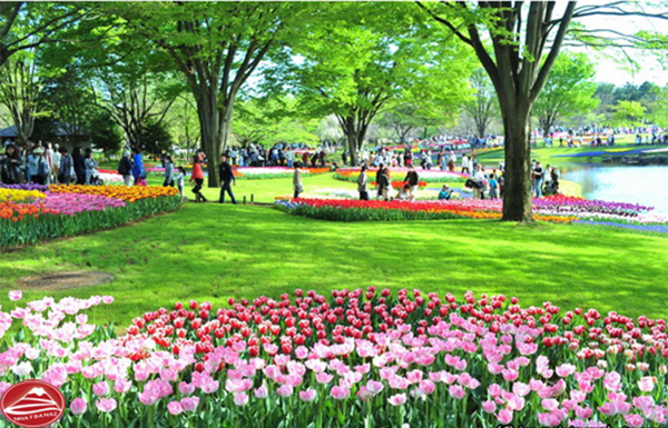 Vườn hoa TuLip ở Công viên Showa Kinen