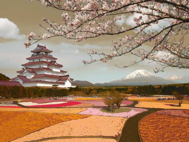 Ngắm Hoa Anh Đào giữa đồng hoa nhìn lên Phú Sĩ