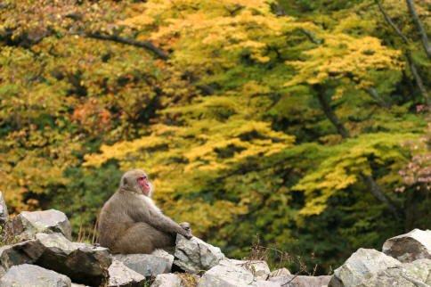 jigokudani-photo-4