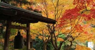 Trải nghiệm một mùa thu đẹp nao lòng ở Nhật