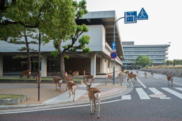 Tới văn phòng tình làm việc thôi (trước tòa vp Nara)