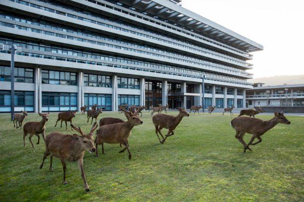 Họp hành xong rồi, chơi thôi (bãi cỏ tỉnh ủy Nara)