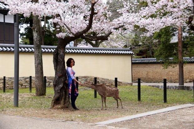 Nai vàng ngơ ngác, gặp cô em con bác ở Nara