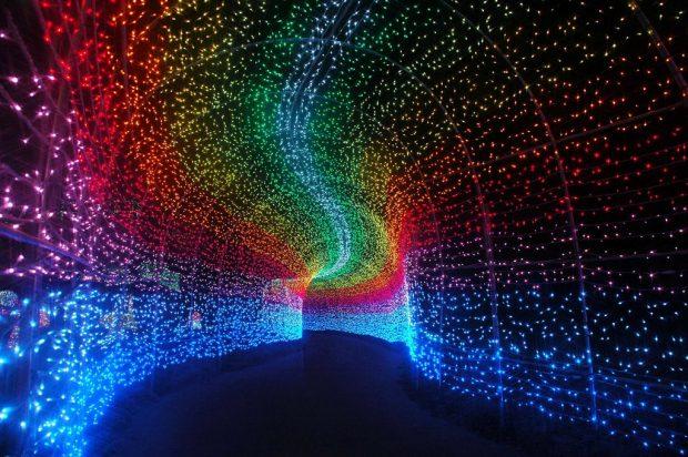 Đường hầm ánh sáng mùa năm mới Nhật bản