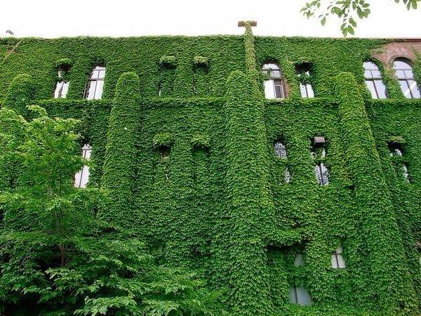 Mách bạn 10 trường đại học nổi tiếng nhất Nhật Bản 6