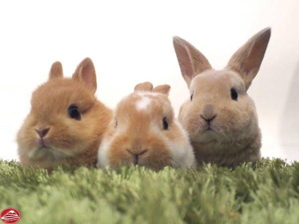 Những chú thỏ đáng yêu
