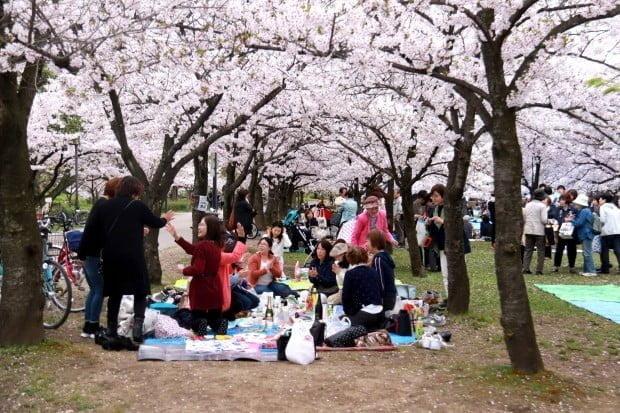Tiệc Sakura