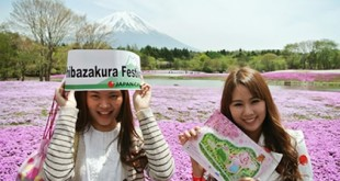 Lễ hội Shibazakura núi Phú Sĩ