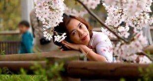 Chùm ảnh hết sức ấn tượng Hoa Anh Đào 2016 của Bình Minh