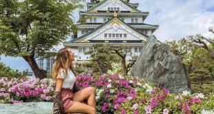 Những loại hoa hot nhất ở Nhật vào tháng 6