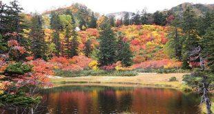 Những loại cây đặc trưng mùa thu Nhật Bản