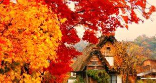 Khi nào thì cây bắt đầu chuyển màu?