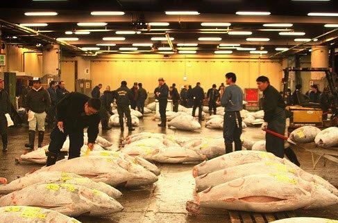 Phiên chợ cá tsukiji