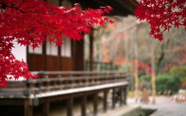 6974973-japan-autumn