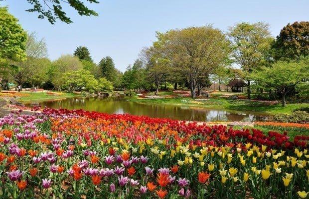 9.-国営昭和記念公園