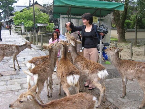 Công viên Nara