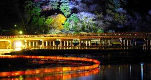 Hanatoro- Con Đường Hoa Và Ánh Sáng Ở Kyoto