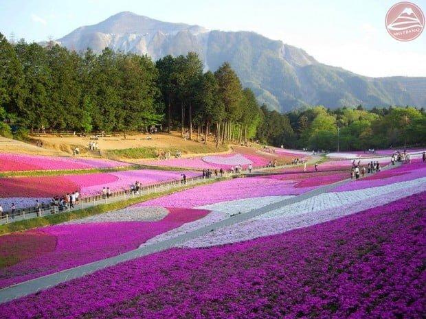 Chichibu Hitsujiyama Park