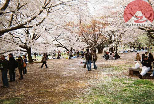 Cong-vien-Ueno-Onshi-Koen-Park
