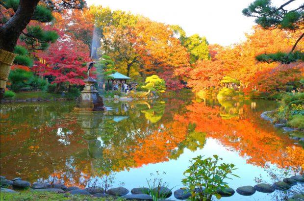 Công viên Hibiya mùa lá đỏ