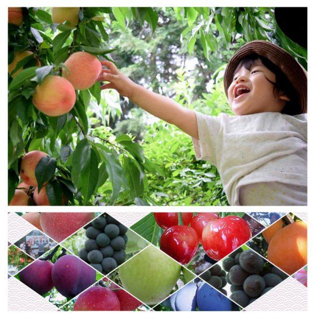 """Trải nghiệm ở """"vương quốc trái cây"""" Yamanashi, Nhật bản"""