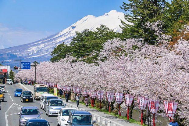 Hoa-anh-đào ở Hirosaki_tháng-5