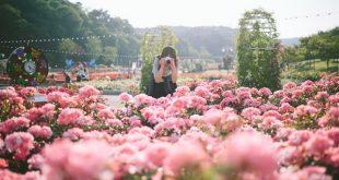 Ngôn ngữ các loài hoa mùa thu Nhật Bản
