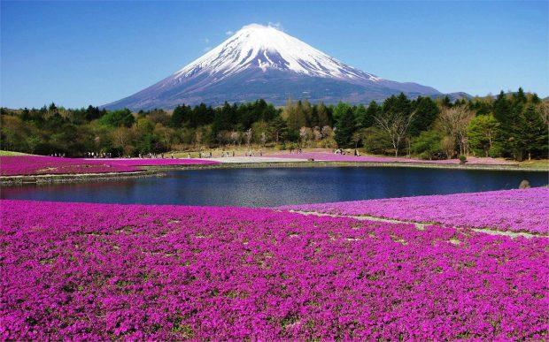 Núi Phú Sĩ, Nhật bản tháng 5 rực rỡ muôn hoa