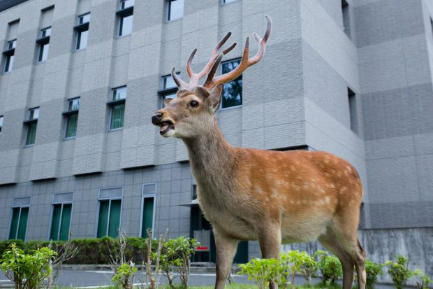 Quan tòa hôm nay xử hay quá (trước tòa án quận ở Nara)