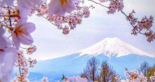 Những bức ảnh đẹp chỉ có ở Nhật bản