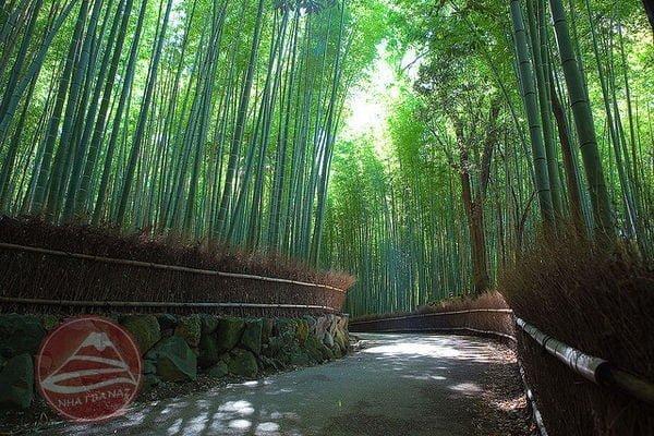 Sagano-Bamboo-Grove-395