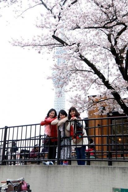Tháp Tokyo Skytree lấp sau tán anh đào