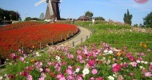 Hoa Nhật Bản: ngắm hoa ở đâu? thời gian nào?
