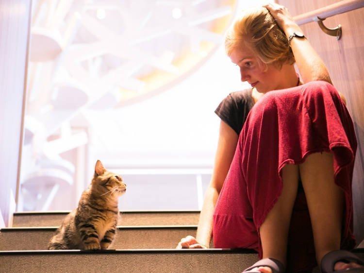 Ngắm nhìn chú mèo của cô gái du lịch ghé quán