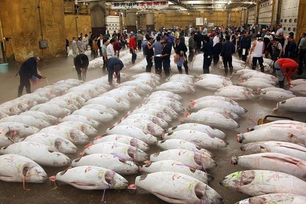 Chợ cá Tsukiji