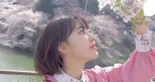 Dự báo thời gian Ngắm hoa anh đào Nhật bản 2018
