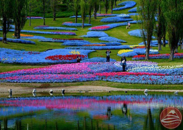 Công viên Nhật bản đầy sắc màu hoa cỏ vào mùa hè