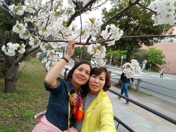 Tranh thủ làm dáng dưới hoa anh đào ở Tokyo