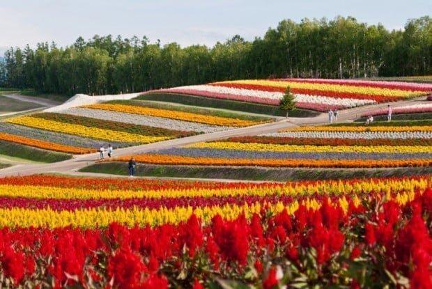flowers_fields_shikisai_no_oka_biei